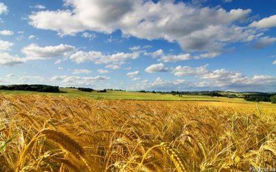 Prezydent Ukrainy podpisał ustawę o obrocie ziemią rolną
